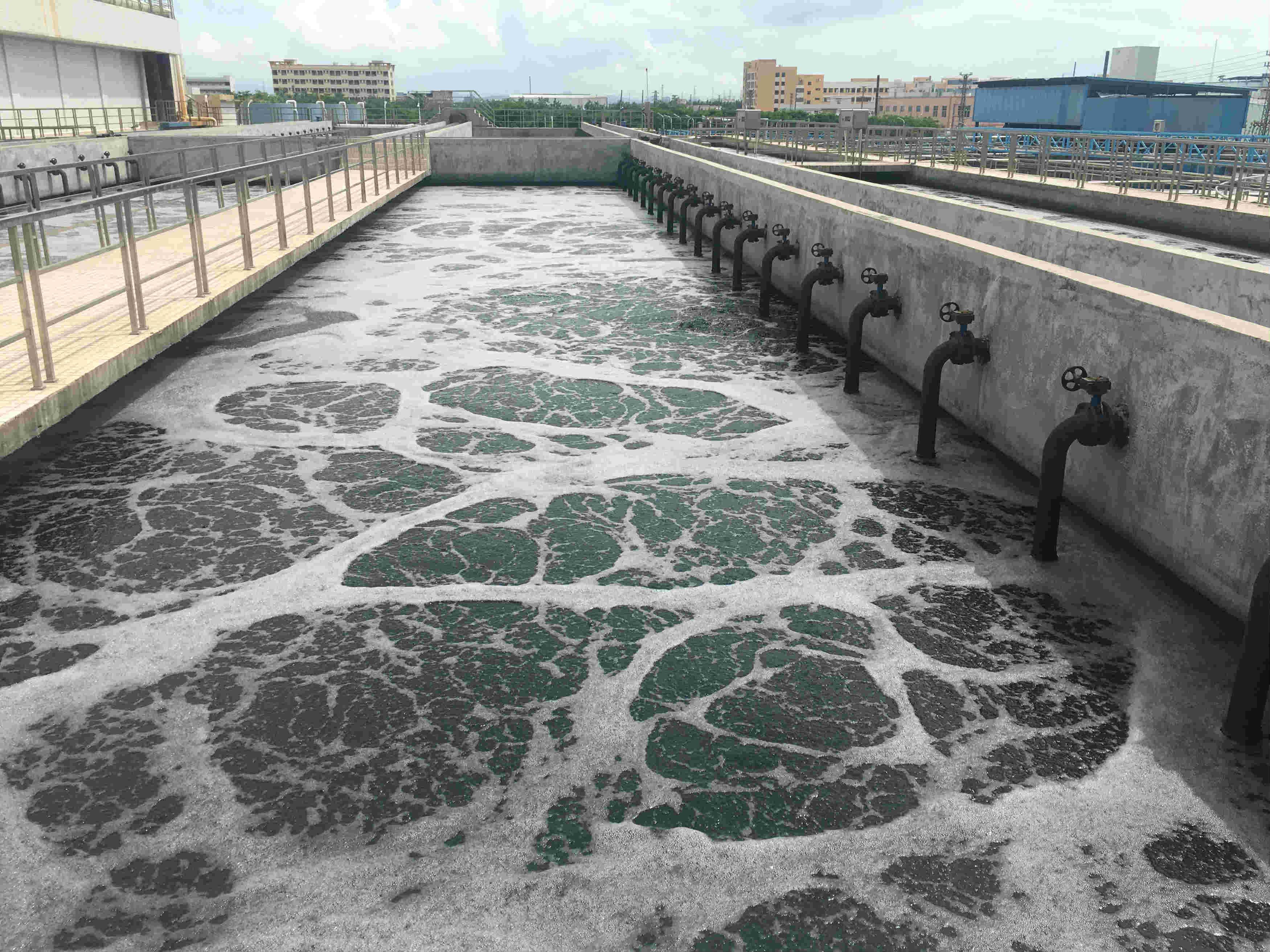 中山污水处理厂-污水净化池